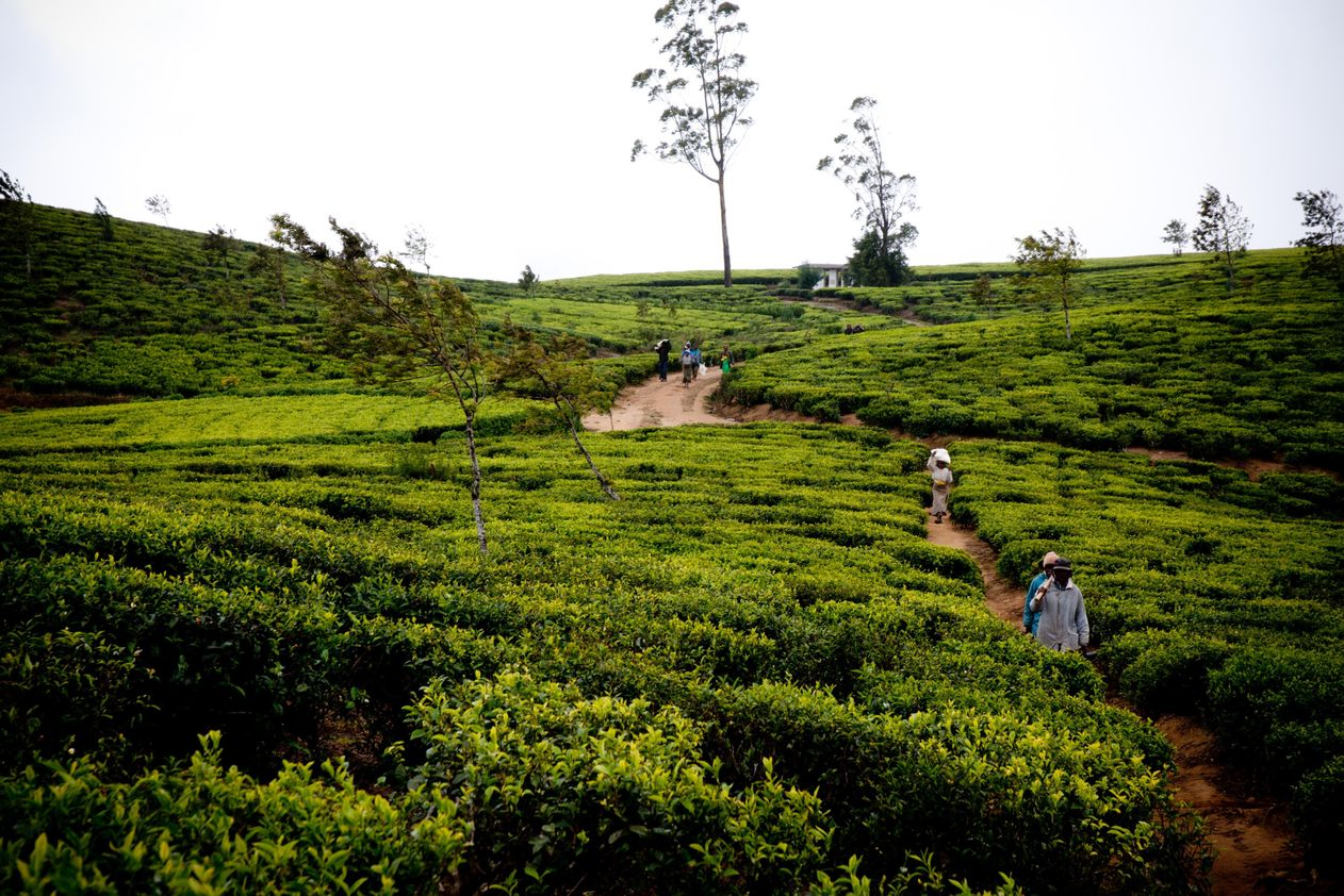 Höhepunkte Sri Lankas - 4 Sterne Hotels
