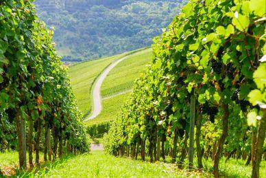 2 Tage Ausspannen in der Pfalz